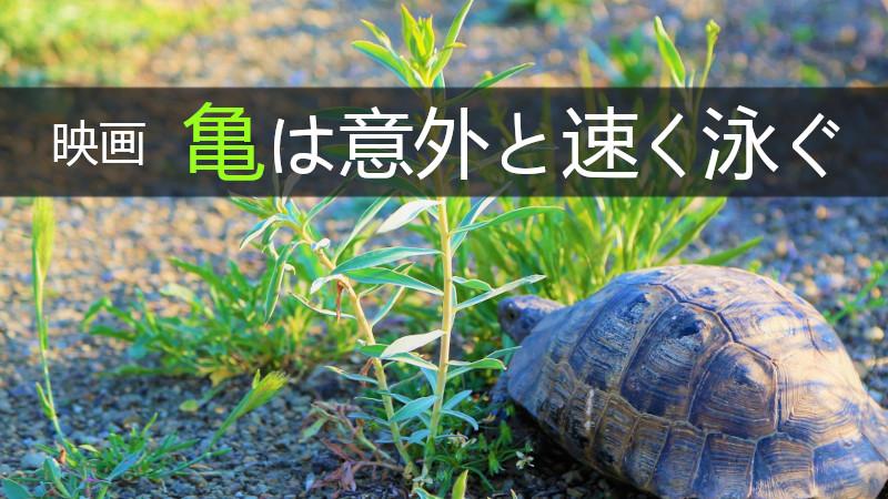 脱力系コメディー映画『亀は意外と速く泳ぐ』